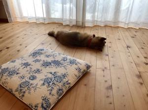 犬も快適.jpg