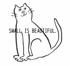 soler cat.jpg